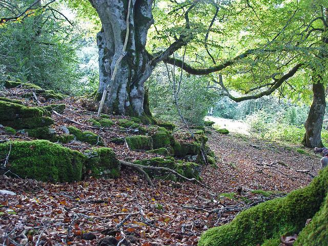 bosque artea urbasa