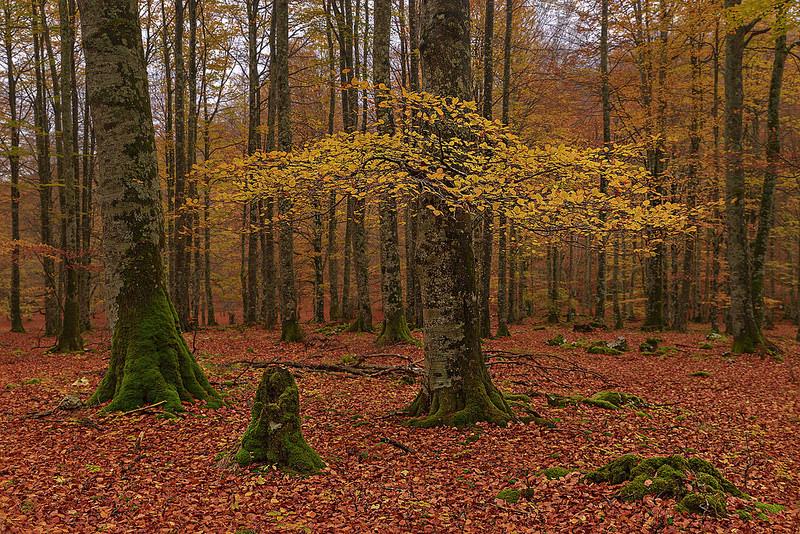 bosque urbasa