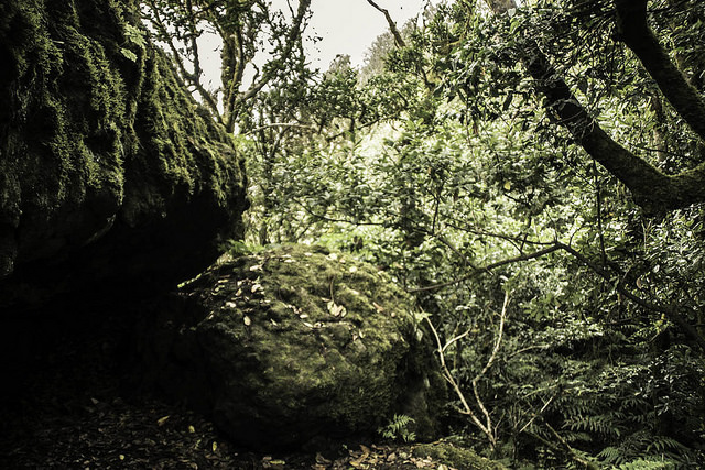 ecosistema anaga
