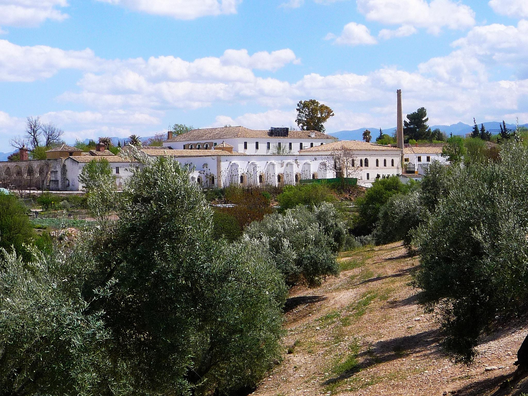 6 Museo Olivo Baeza