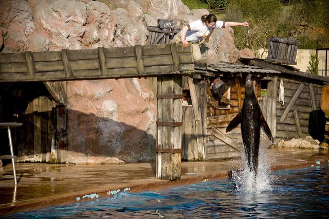 leones marinos cabarceno