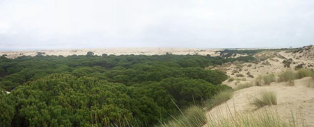 bosque doñana