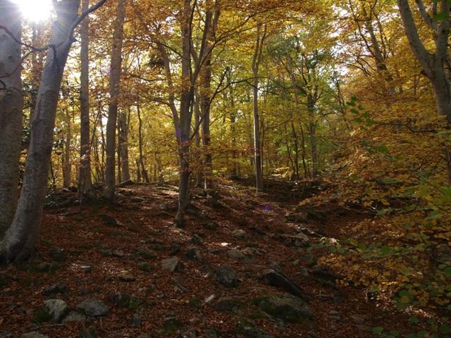 otoño moncayo