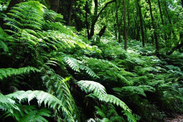reservas biosfera la palma