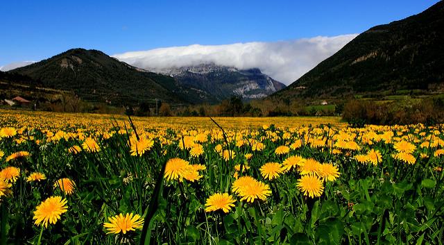 valle hecho primavera