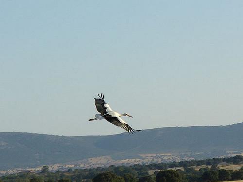 aves cabaneros
