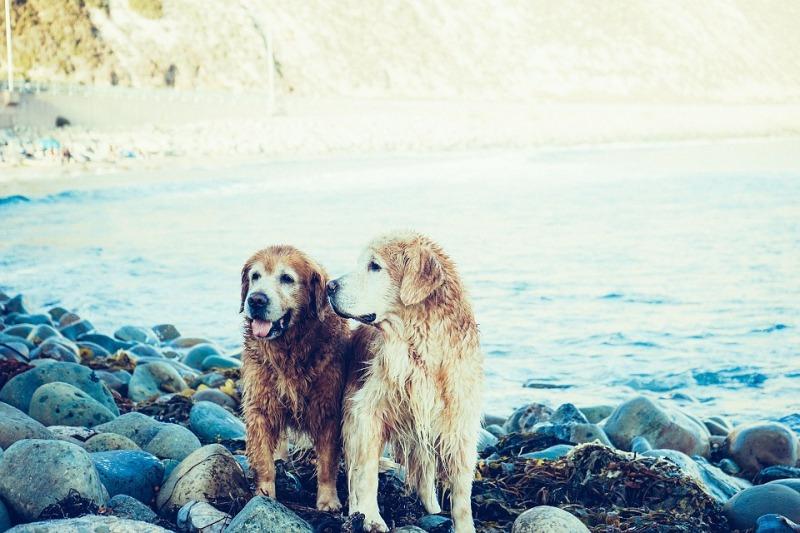 playas perros españa