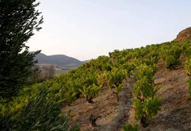 Viñedos de Bodegas Orvalaiz, en Navarra
