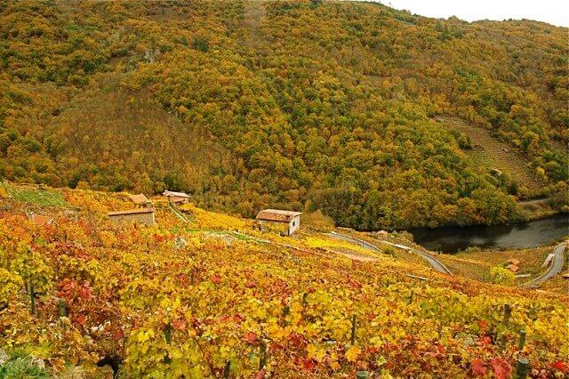 paisaje ribeira sacra otoño