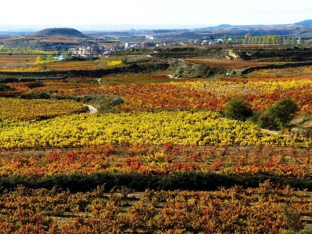 paisaje rioja alavesa otoño