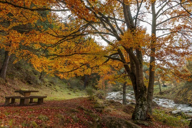 sierra cebollera otoño
