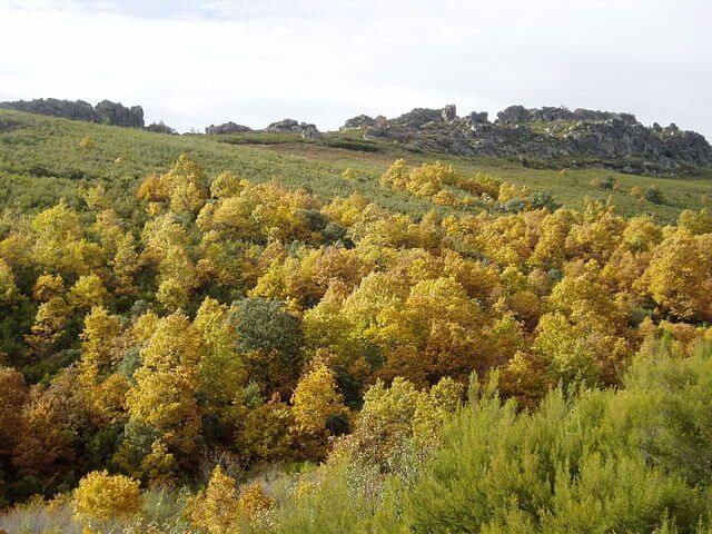 sierra culebras otoño