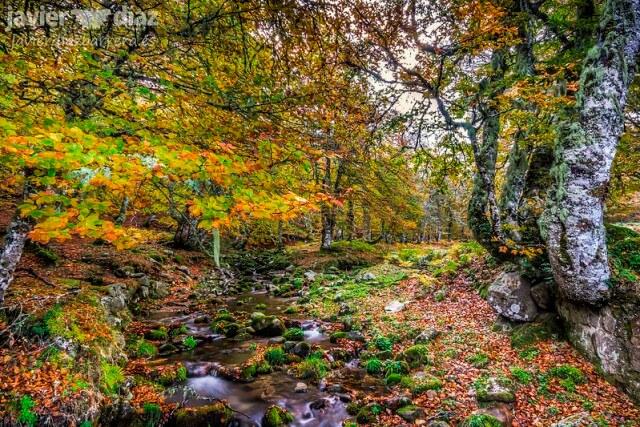 soto sajambre otoño