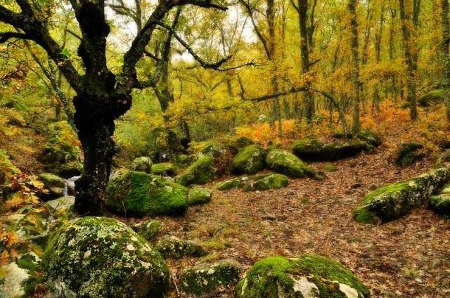 valle jerte otoño
