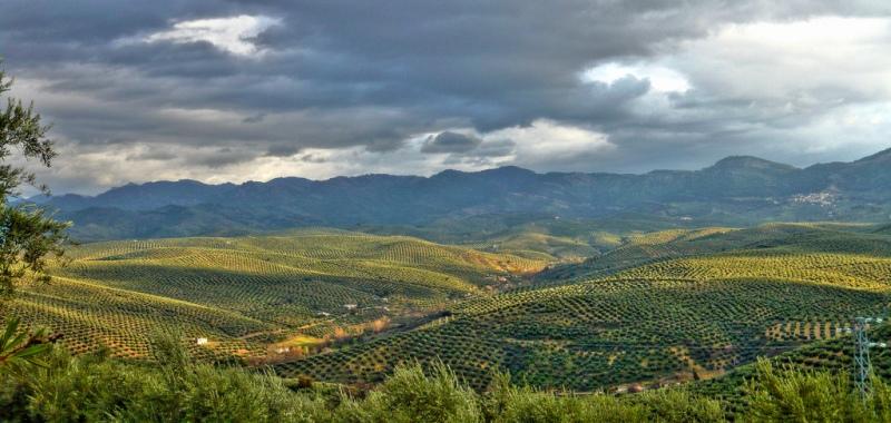 olivares cazorla