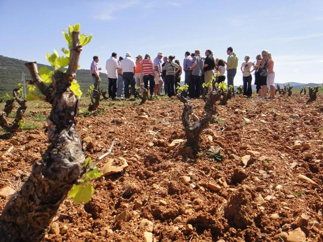 visitar viñedos vino calatayud