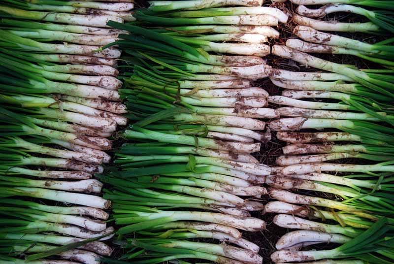 productos y gastronomia de tarragona