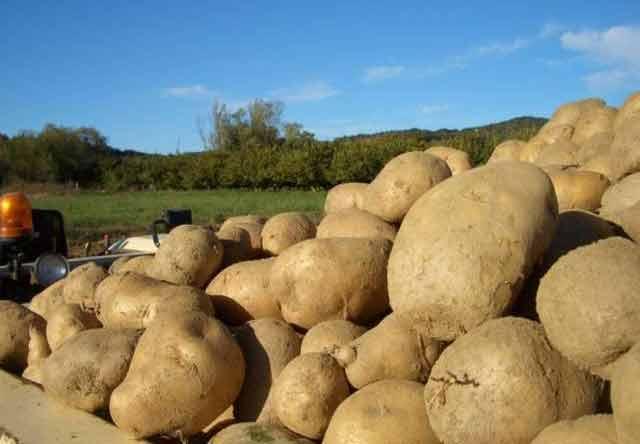 gastronomia de tarragona patata de prades
