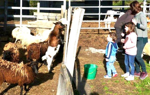actividades agroturismo animales