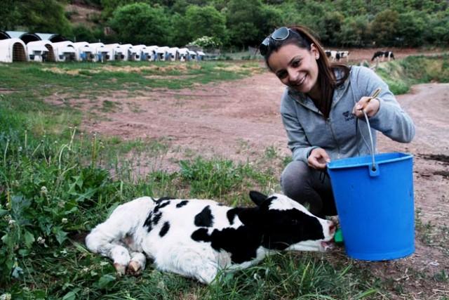 actividades agroturismo vacas