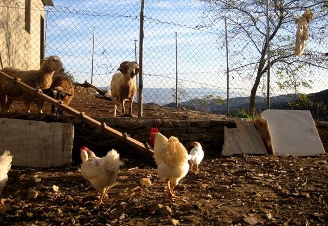 agroturismo actividades granja