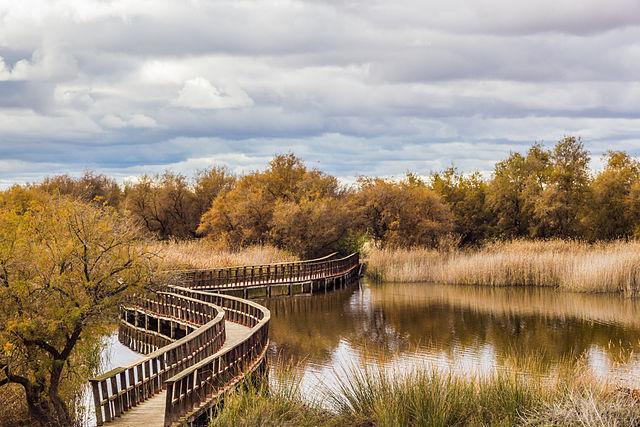 parque nacional tablas daimiel