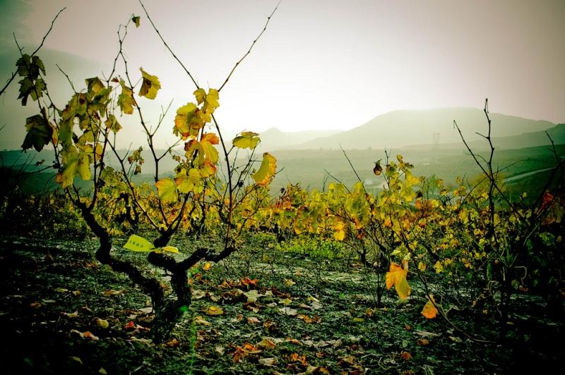 ruta vino rioja alavesa