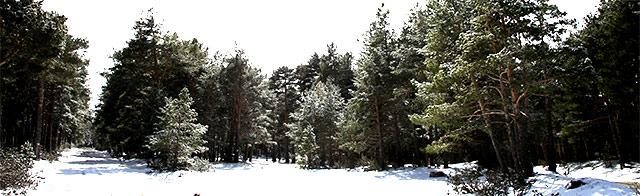 paisaje-bronchales-invierno