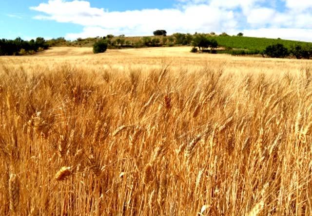 pasta de grano duro de Daroca