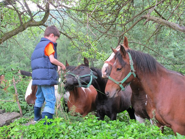 caballos pirineo aragones