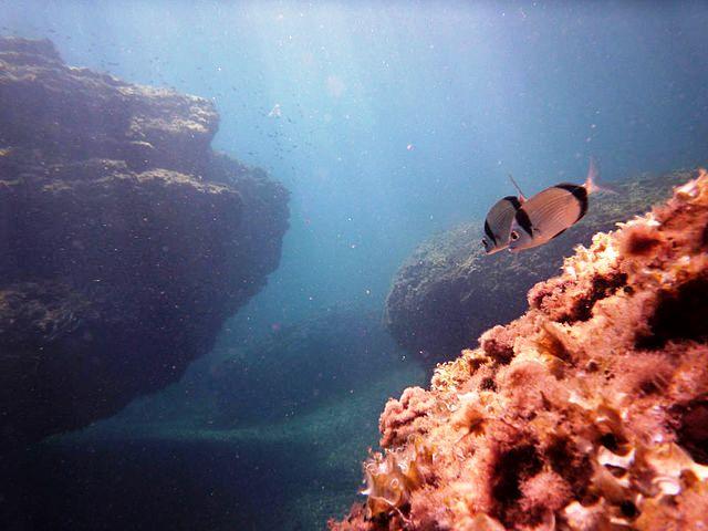 reserva marina cabo palos