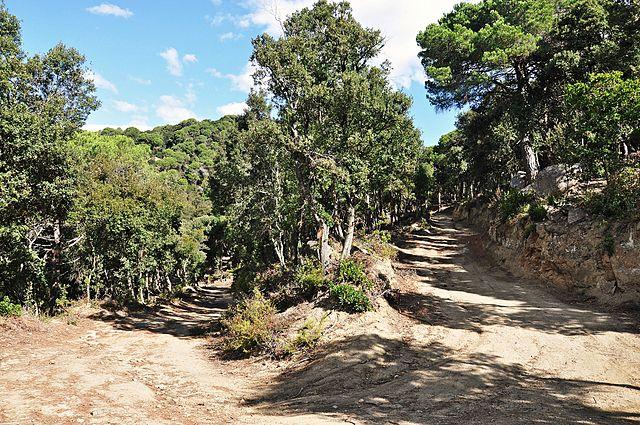 ruta montnegre corredor