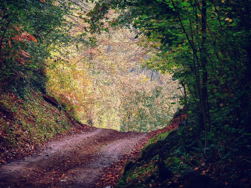 rutas senderismo girona