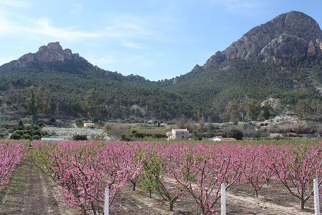 ruta floracion cieza