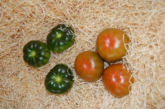 tomate-de-la-canada-hijar