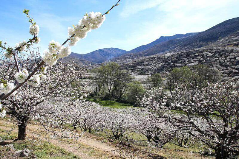 valle-del-jerte-comarca-que-ver